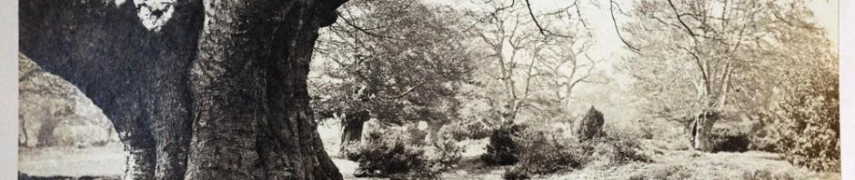 1890s sepia image of Burnham Beeches